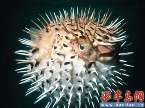 """青岛海底世界""""五一""""推出有毒生物主题展"""